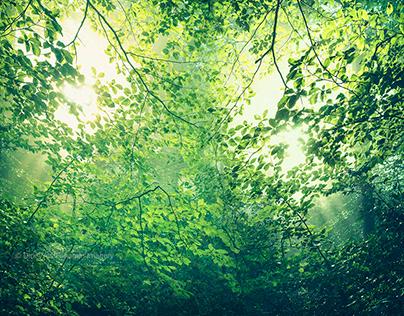 L a u b w a l d - deciduous forest