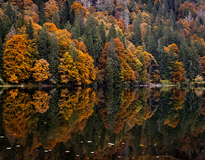 Black Forest in Fall