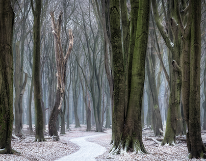 Winter in Speulderbos