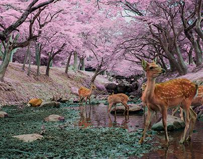 INFRARED JAPAN