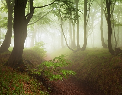 Seasons in forest