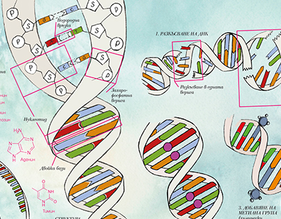Replication and mutation DNA