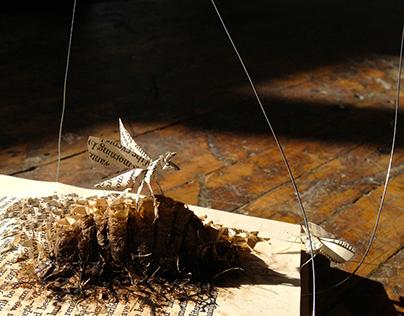 Book Wasps