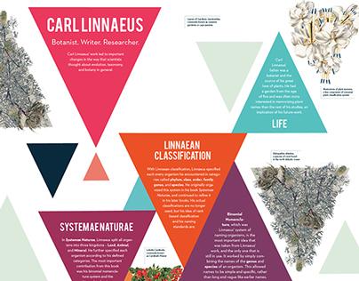 Carl Linnaeus Poster