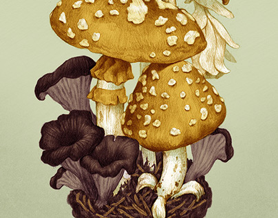 Mycology Postcards