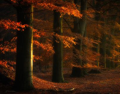 Autumn images