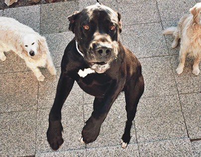 Dogs, Portrait