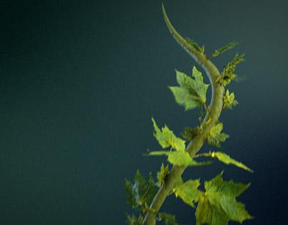 Houdini - growing ivy