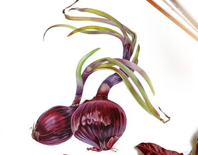Onions in botanical watercolor