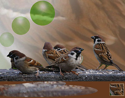 Sparrows are why I am an educator