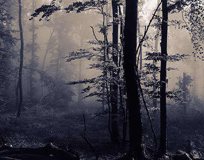 In the Depth of the Forest - The Life of Trees II