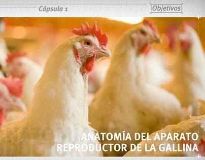 Curso de E-learning - Aparato Reproductor de la Gallina