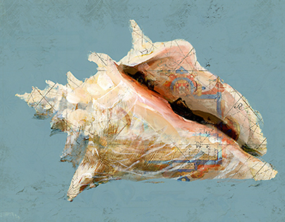 Shells Paintings on Nautical Maps