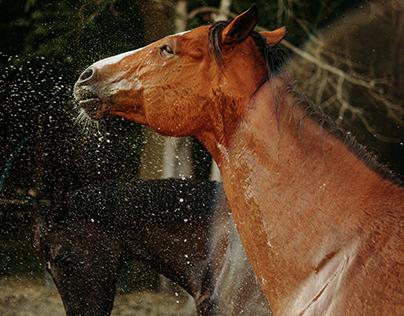 Horses of North Carolina. Pt 1.