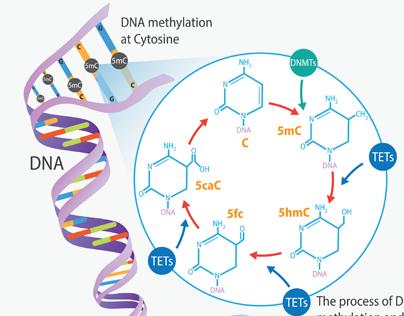 Epigenetics and Gum Disease