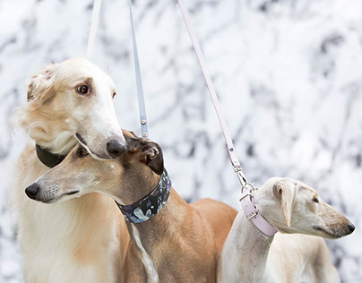 Sighthound Squad
