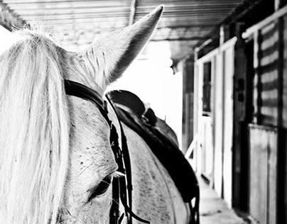 HORSES BLACK & WHITE