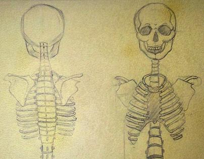 Upper Skeletal Study