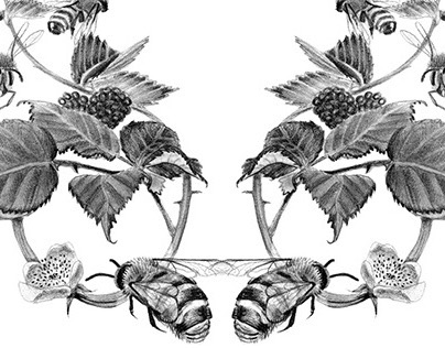Bee Weave Illustrations