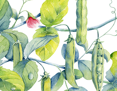 Watercolor peas, rosehips and squash