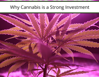 Why Cannabis is a Strong Investment