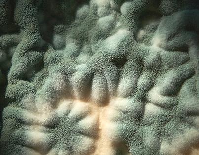unintentional mold