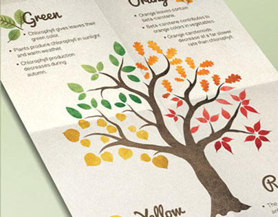 Autumn Leaf Colors Infographic