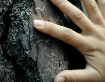 Plantar uma árvore - IMPRENSA