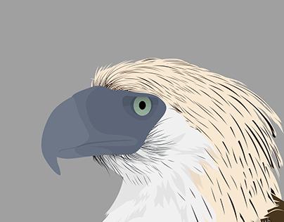 Philippine Eagle Vector Art