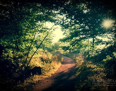 Photo Project Autumn