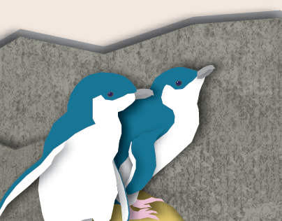 Little Blue Penguins - Wellington