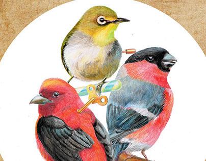Birds.Greeting cards.