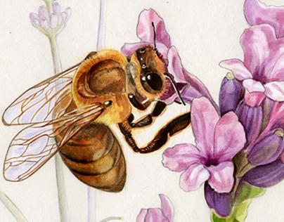 "descriptive animal illustration ""bee"""