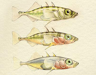 "descriptive animal illustration ""fish"""