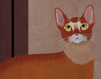 Cat-   Abyssinian cat