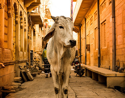 The Golden Country - INDIA