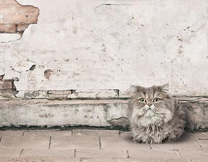 Persian Cat   Exhibition Poster & Brochure, 2016