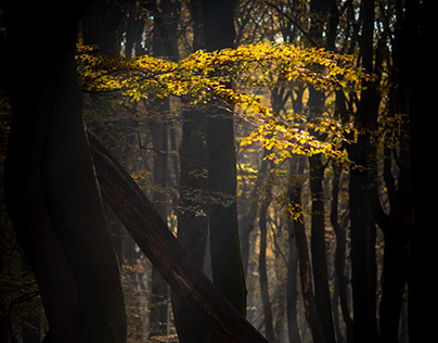 Autumn; the love between light and leaves