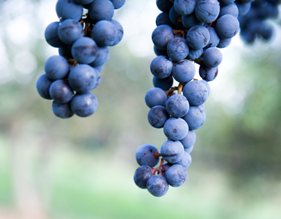 Wines & wineries -photos & stories for clients