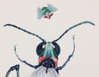 Fukushima Fly