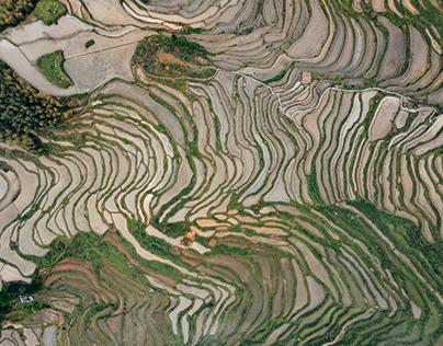 Zhejiang - Landscape Terrace