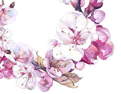Sakura | Watercolor