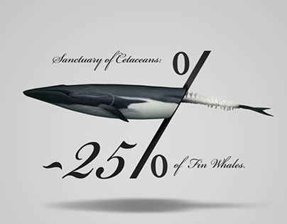 -25% of fin Whales in Mediterranean sea. Poster 50x70