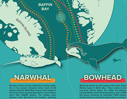 Infographic: The Arctic Whales of Baffin Bay