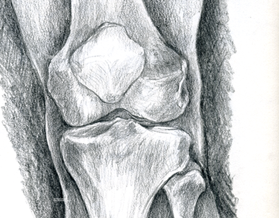 Medical Illustration – The bones of the knee — Das Knie