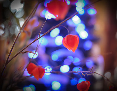 Nifty Fifty Christmas