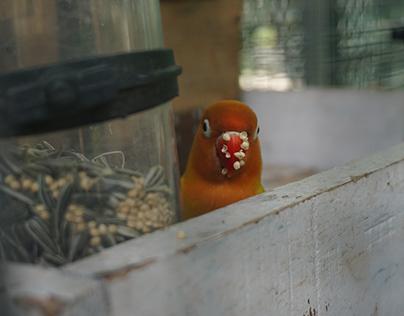 Lovebirds Photography Edition