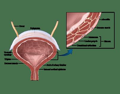 Medical Textbook Graphics