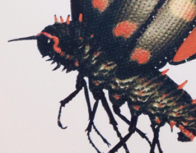 Malignant Moth