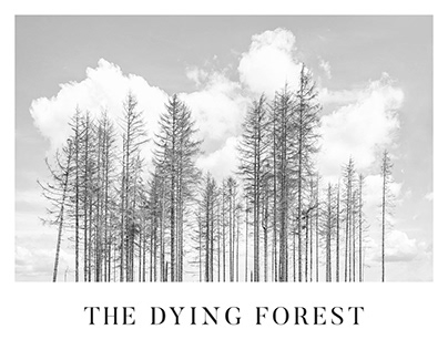 The Dying Forest